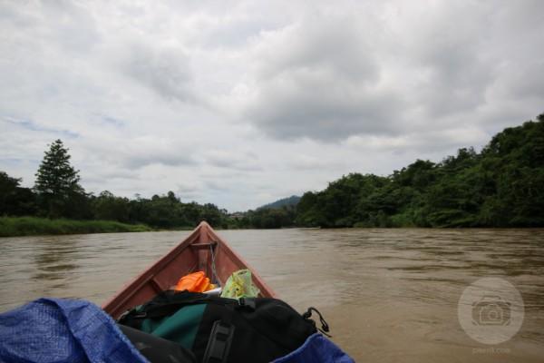 Pikenik long-duhung-pikenik Long Duhung and Long... Traveling  puskesmas keliling Pencerah Nusantara Long Duhung ketinting Kelay Kalimantan Timur Berau